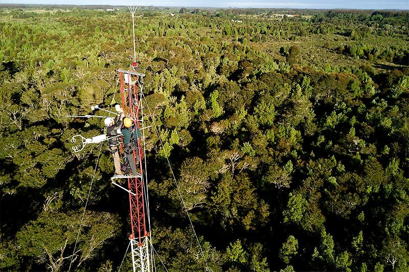 Investigadores explican por qué el bosque patagónico almacena tres veces más carbono por hectárea que la Amazonía