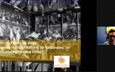 UPLA y Museo de Historia Natural de Valparaíso acuerdan trabajar unidos para divulgar las ciencias