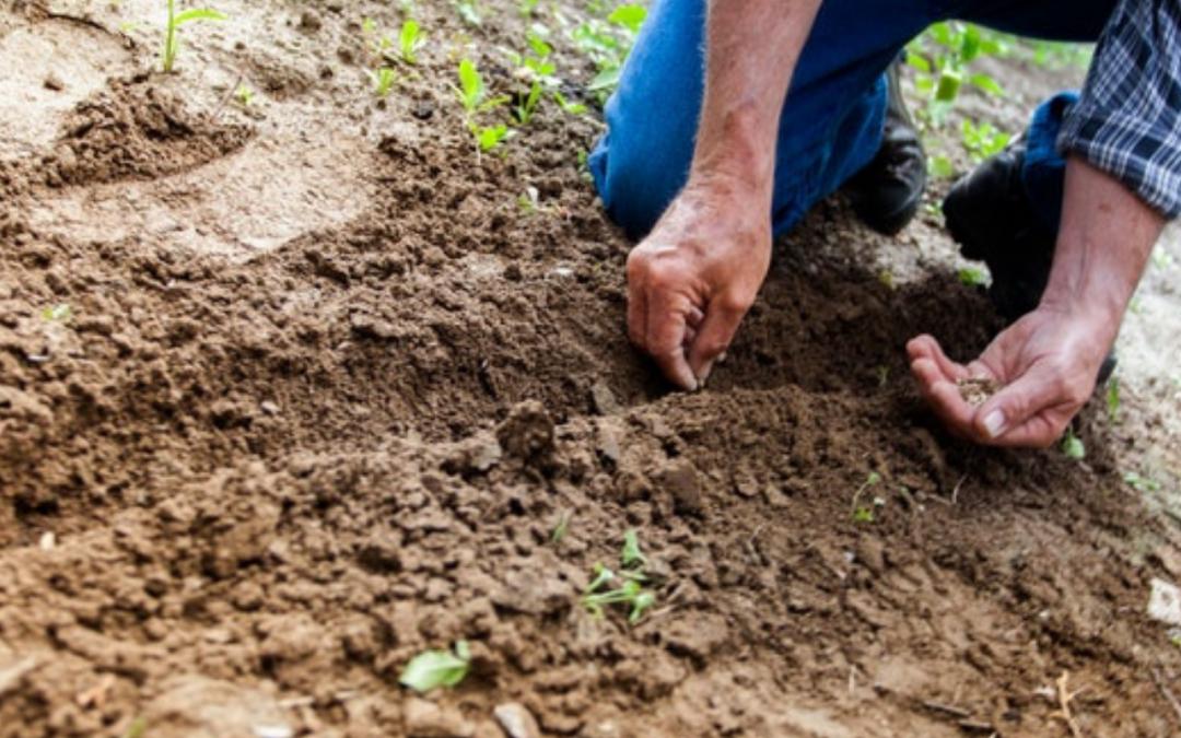 Llaman a poner cuidado en las condiciones de los trabajadores agrícolas para evitar contagios de COVID-19